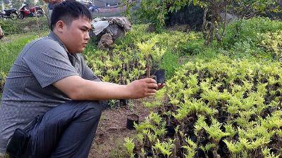 Trần Kim Việt bên vườn ươm cây giống